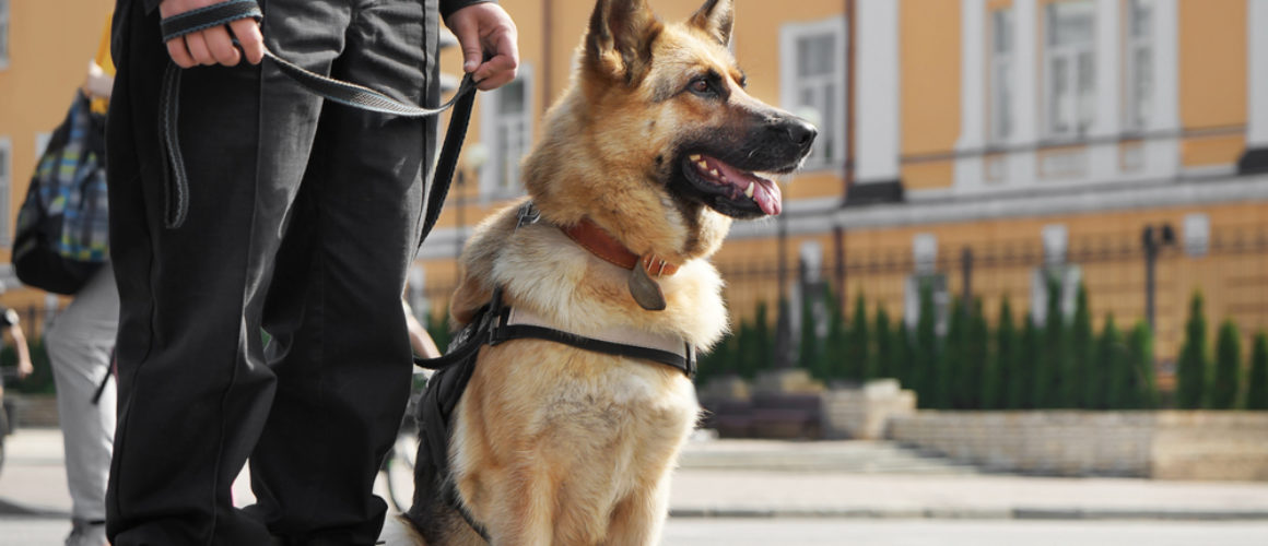 Reasons to use Security Dog Services